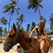 joooy – love horses !
